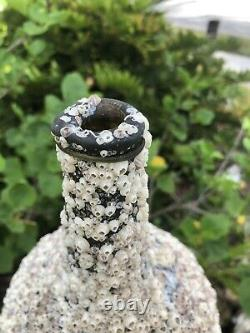 1700s early Black glass onion bottle covered with barnacles / Florida