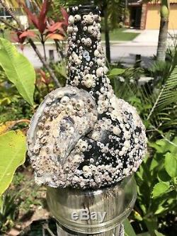 Early Black glass onion bottle covered with barnacles / Florida